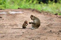 Brown-Affe sitzt auf der Niederlassung Stockfoto