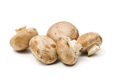 Brown agaricus mushrooms royalty free stock photography