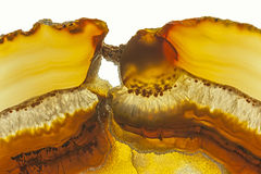 Brown Agate Royalty Free Stock Image