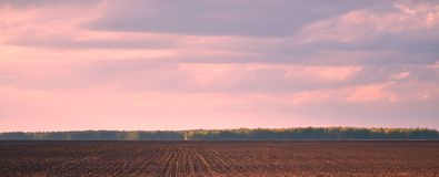 Brown agriculture field and blue sky Royalty Free Stock Image