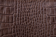 Brown alligator leather details Royalty Free Stock Photo
