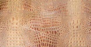 Brown anaranjado grabó en relieve textura del cuero del cocodrilo Imágenes de archivo libres de regalías
