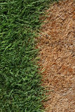 Brown And Green Grass Stock Photo