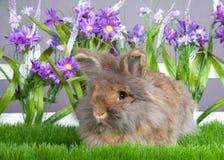 Brown Angorski królik w kwiatu ogródzie Fotografia Stock