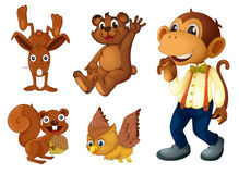 Brown animal collection Stock Images