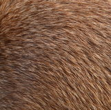 Brown Animal Fur Stock Photos