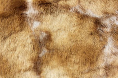 Brown animal fur close up Stock Image