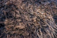 Brown animal hair closeup Royalty Free Stock Images