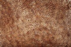 Brown Animal Skin Texture Royalty Free Stock Photo
