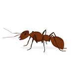 Brown ant. With antennae on a white background vector illustration