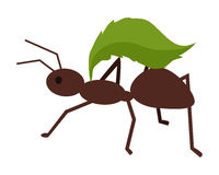 Brown Ant with Green Leaf Royalty Free Stock Image