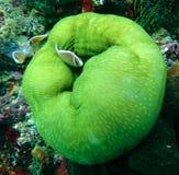 Brown Aquarium Fish Stock Photography