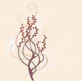 Brown arbusto Imagen de archivo libre de regalías
