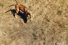 Brown asustó el perro del refugio que presentaba afuera en el parque soleado, adop Imagen de archivo