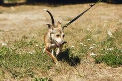 Brown asustó el perro del refugio que presentaba afuera en el parque soleado, adop Fotografía de archivo