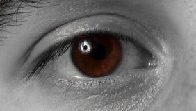 Brown-Auge, Mann. Schwarzweiss Stockfoto