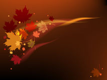 Brown autumn background Royalty Free Stock Images