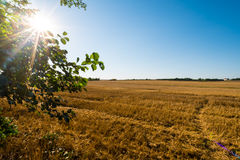 Brown autumn field with the tree on left side Royalty Free Stock Photos