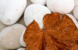 Brown Autumn Leaf Fotografia Stock