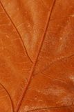 Brown autumn leaf texture Royalty Free Stock Image