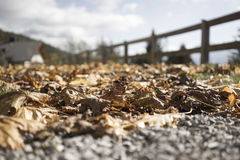 Brown autumn leaves on a gravel path. Very low angle view of dried decaying brown autumn leaves on a gravel path alongside a rustic wooden fence with the roof of Royalty Free Stock Images