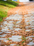 Brown autumn leaves on ground. Brown dry autumn leaves on the ground in a park Royalty Free Stock Images