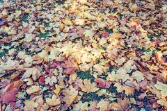 Brown Autumn Leaves On The Ground - beau fond saisonnier images stock