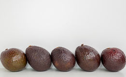 Brown avocado in row isolated white background Stock Photo