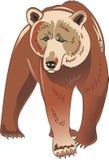 Brown-Bär stock abbildung