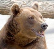 Brown-Bär 3 Lizenzfreies Stockfoto