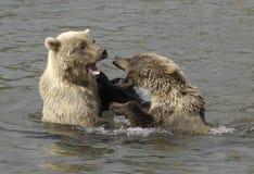 Brown-Bären Lizenzfreie Stockfotografie