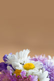 Brown background with blossoms of garden flowers Stock Photography