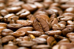 Brown background of coffee beans Stock Photography
