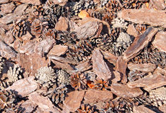 Brown background made of fir cones and bark. Brown background made of fir cones and pine bark Stock Images