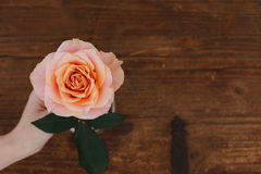 Brown background roses Stock Photo