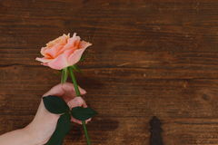 Brown background roses Stock Images