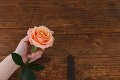 Brown background roses stock photography