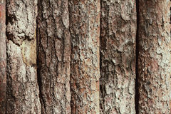 Brown background texture crust of wooden planks logs bark Royalty Free Stock Images