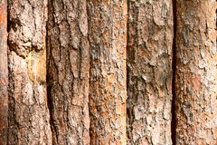 Brown background texture crust of wooden planks logs bark Stock Photo