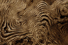 Brown background with tree root pattern. Texture of roots of tree with wavy lines and age rings. Abstract background Stock Photo