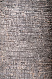Brown background trunk of a palm closeup. Royalty Free Stock Images