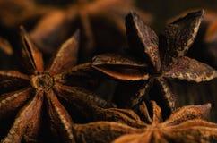 Badian close up. Brown badian close up on dark background stock photos