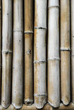 Brown bamboo Stock Photography