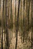 Brown bambusa las Zdjęcie Royalty Free