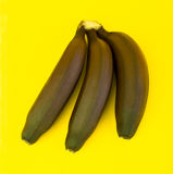 Brown bananas Royalty Free Stock Photos