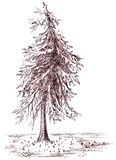 Brown banked monochrome tree sepia sketch  Stock Images