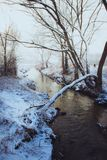 Brown Bare Tree Near River Covered in Snow Royalty Free Stock Photography