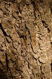Brown bark. Photograph of brown bark Royalty Free Stock Image