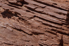 Brown Bark Royalty Free Stock Image