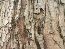 Brown bark Royalty Free Stock Images